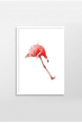 Action Zebra - Jump Flamingo 40x50 cm Poster